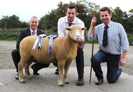 Reserve Champion with breeder, Ben Lamb, Judge, Gary Henderson, & Seamus McCormick from Danske Bank