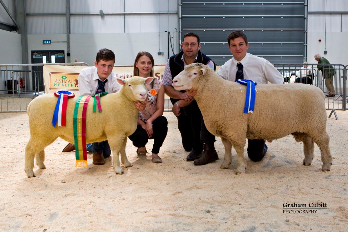 Supreme champion (Kildowney Flock) & Reserve (Huish Flock)