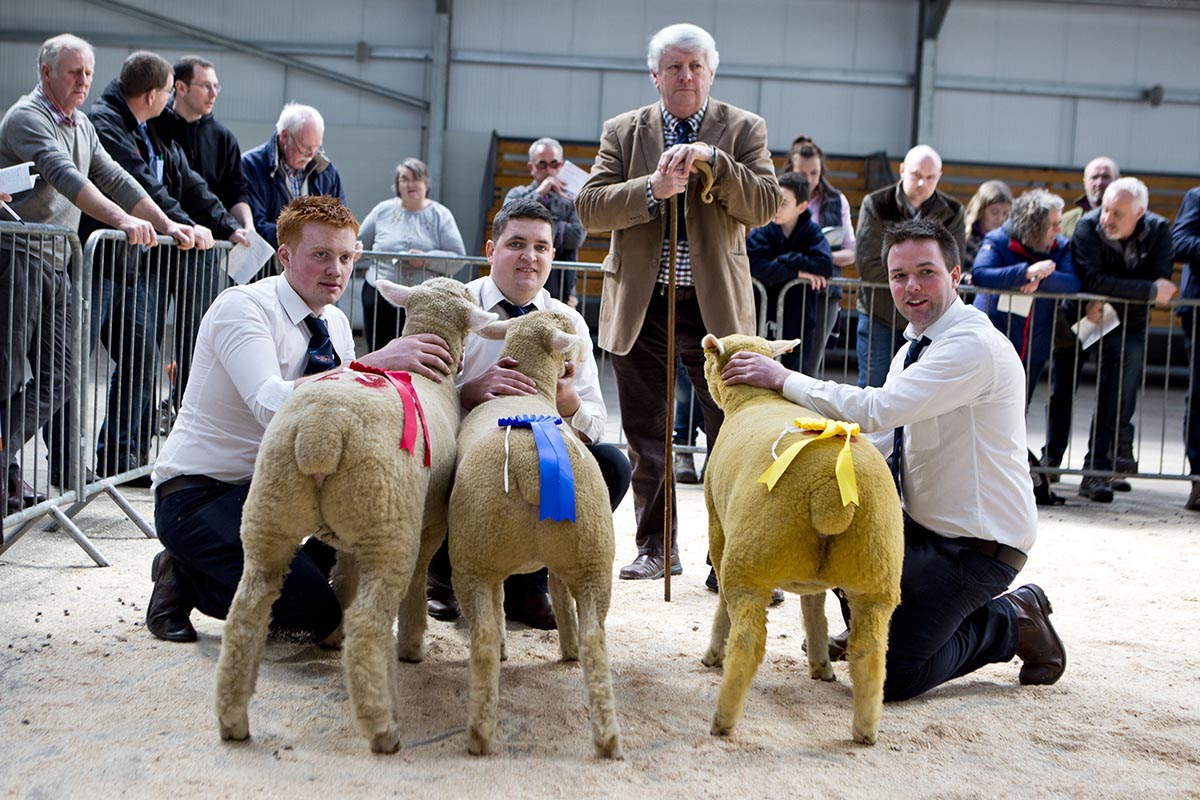 Left – Shane Wilson with the winner of the ewe lamb class, Raymond Hill's Oliver Tree Babs