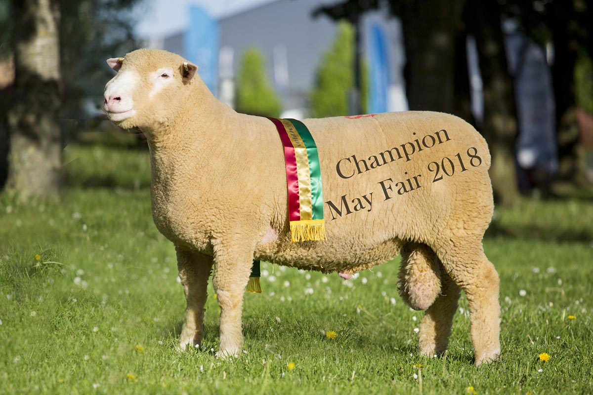 Dorset Sheep May Fair 2018