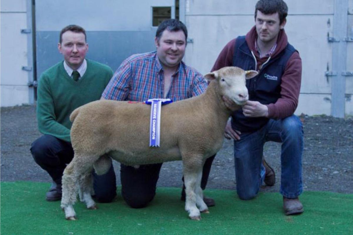 Shearling Ram winner with R Currie (Judge), T Wright (Owner), and K Donnelly (Provita)
