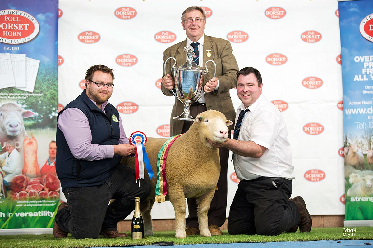 Champion Male Exhibit and Best Shearling Poll Ram, sponsored by Waitrose, Thomas Wright's Ballytaggart XStyle, with from left Dylan Laws, Waitrose, Edwin Pocock, President and Thomas Wright