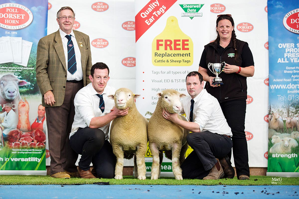Best Pair of Ram Lambs, sponsored by Shearwell Data Ltd., Ben Lambs Richhill Ziggy, Z781 & Zee, Z794, with from left Edwin Pocock, President, Ben Lamb, Seamus Mullan and Helen Davies, Shearwell Data
