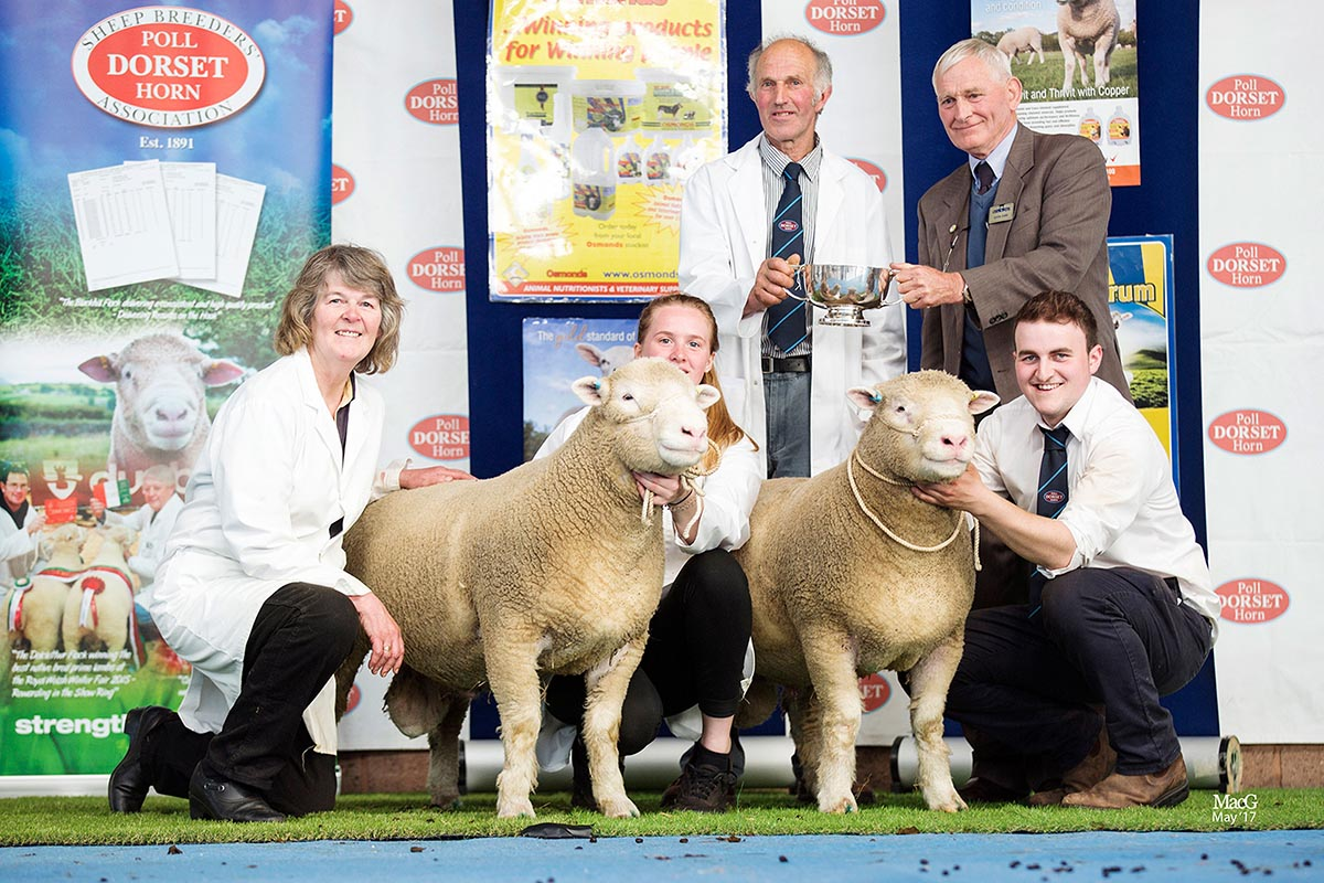 Best Pair of Shearling Rams, sponsored by Mr Simon Dunk, Osmonds, W L French's Wilsey X93 and X82, with from left Heather French, Jo Burrington, Les French, Mr Simon Dunk, Osmonds, and James Robson
