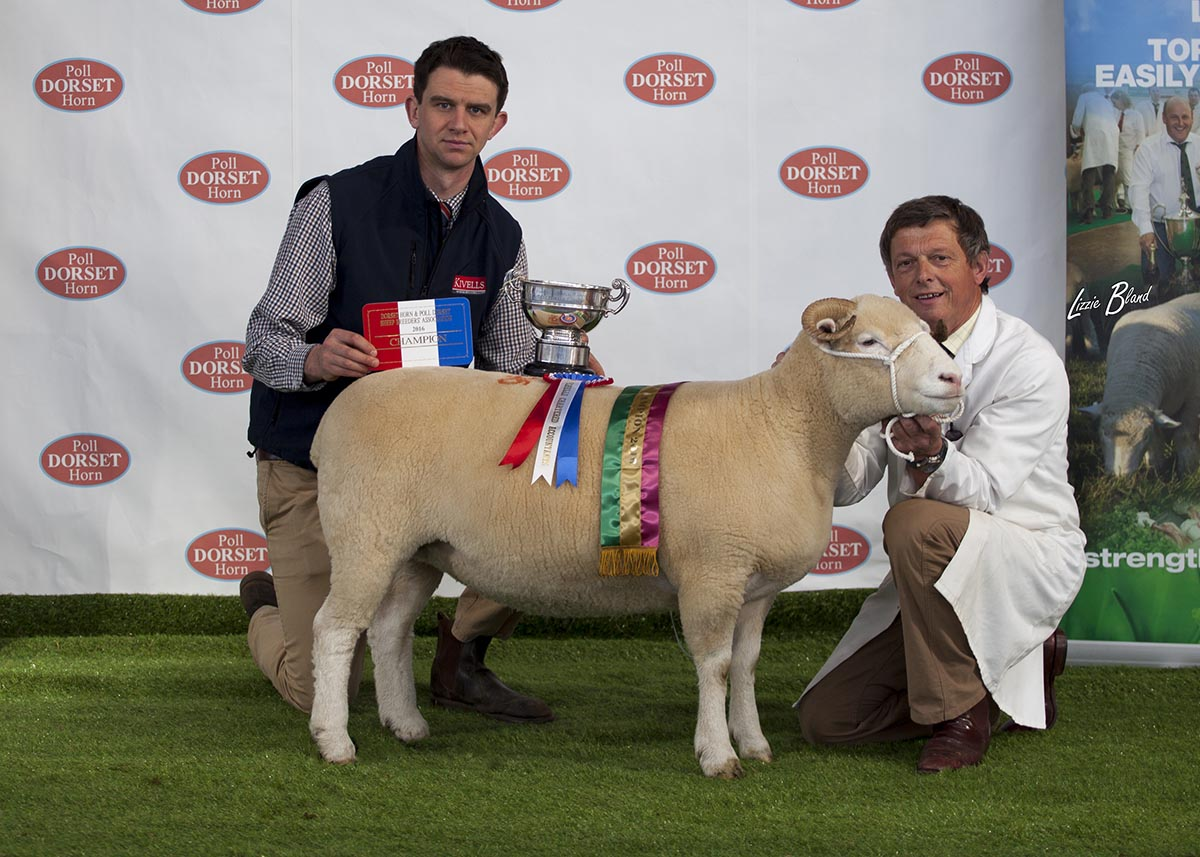 Champion Female, sponsored by Mitchells Chartered Accountants, & Best Shearling Ewe Poorton Warbler W345 with Russell Steer, Kivells (left) and Francis Fooks (right)
