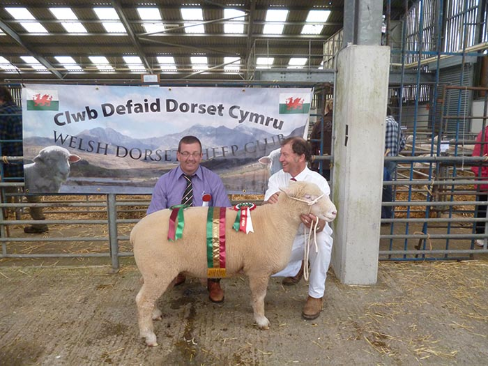 Breed Champion with Judge, Geraint Jones and David Rossiter