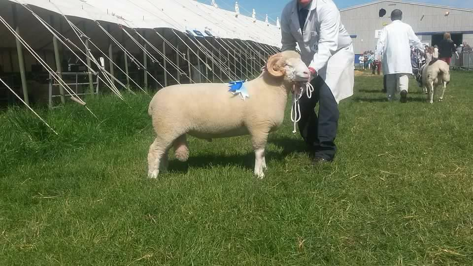 Matthew Gray with the 1st prize winning Wool on the Hoof