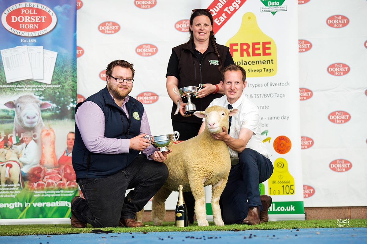 Champion Female, sponsored by Shearwell Data Ltd. and Best Ewe Lamb, sponsored by Waitrose, David Lewis' Pembroke Zara, Z25, with from left Dylan Laws, Waitrose, Helen Davies, Shearwell Data and David Lewis