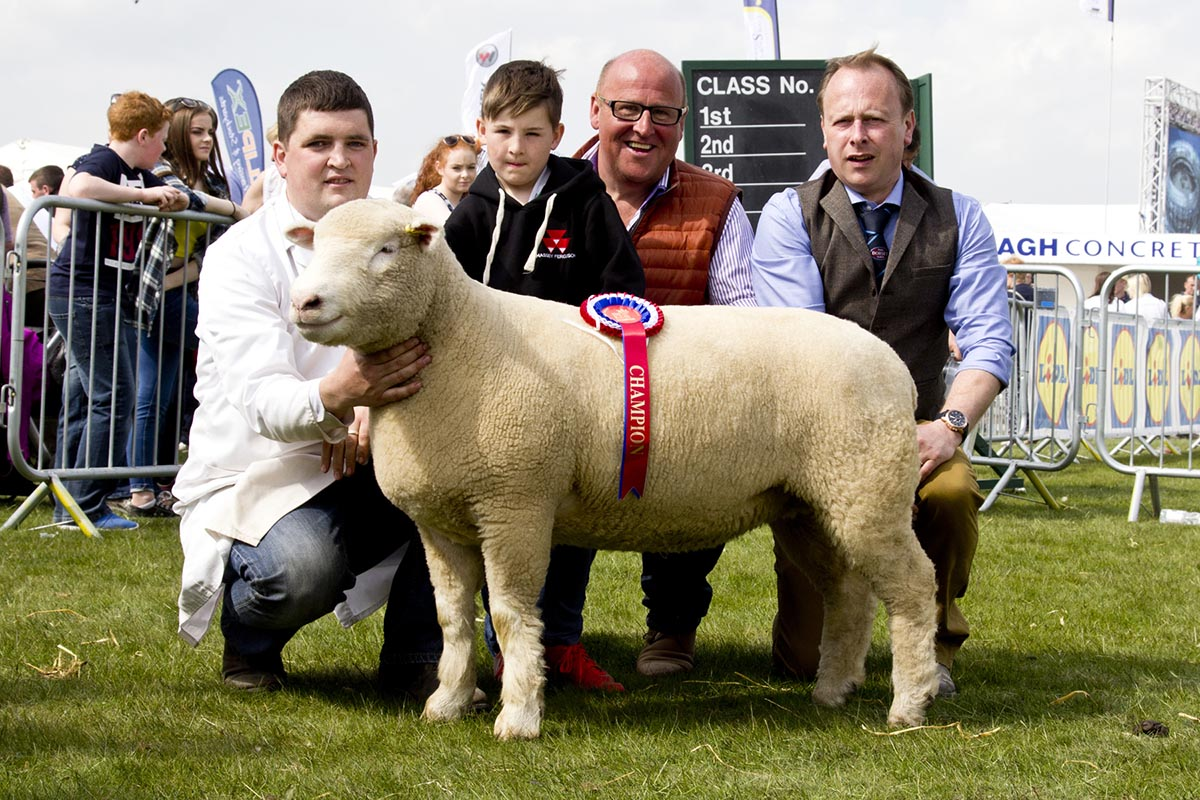 Samuel Caldwell (Handler), Raymond Hill, Son Oliver, and William Carson (Judge), with the Breed Champion (Shearling Ewe)
