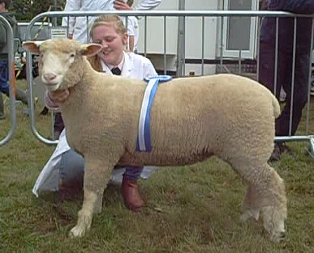 Ellen McClure with the Reserve Champion, Ewe Lamb